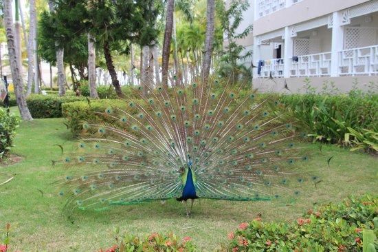 Vista Sol Punta Cana : Территория отеля