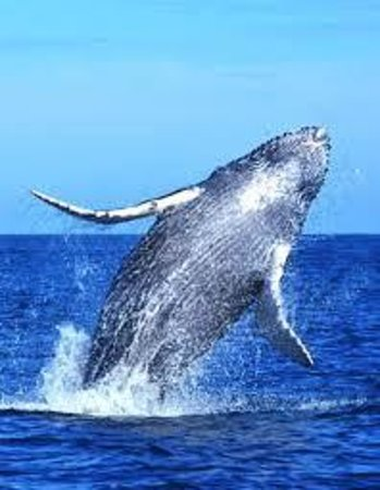 Chica Locca : We always get close to whales