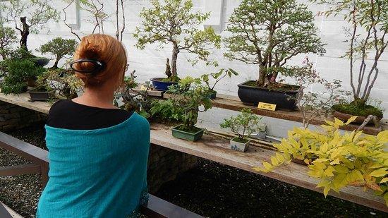 Museo del Bonsai: bonsai variety