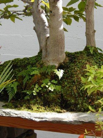 Museo del Bonsai: a nice grove specimen