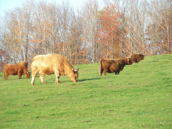 Au Diable Vert : Pré des vaches