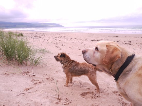 Muasdale Holiday Park: Dogs holiday