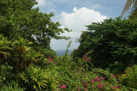 Andromeda Botanic Gardens : view
