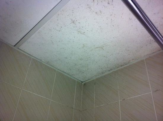 Ibis Styles Sydney Lansvale : Mould on the bathroom ceiling.