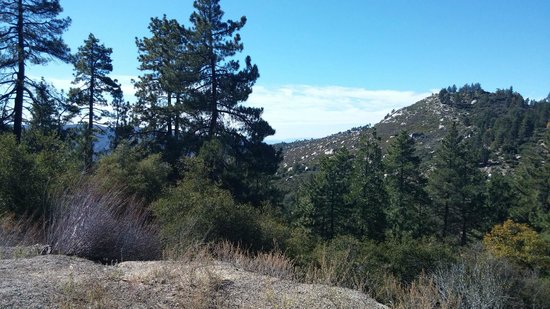 The Grand Idyllwild Lodge: Wonderful Views all over