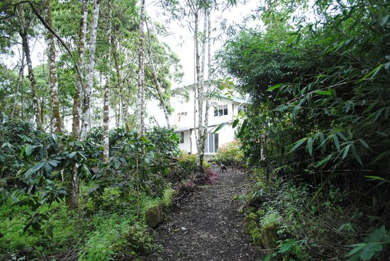 Semilla Verde Boutique Hotel : View of guest house from the trails