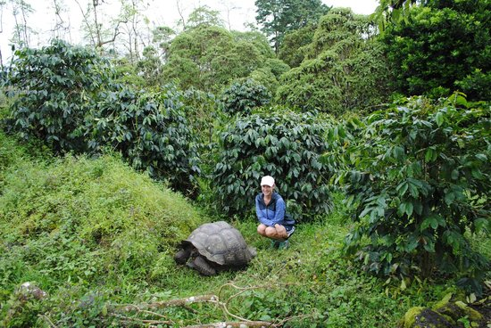 Semilla Verde Boutique Hotel : Giant tortoises right outside your door