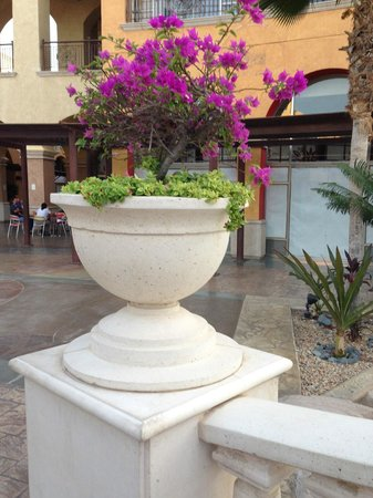 The Grand Mayan Los Cabos: Nice landscape touches all over