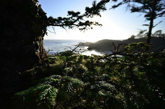 Long Beach Nature Tours: Wild Pacific Trail