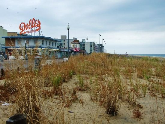 Rehoboth Beach : broad dunes help protect the commercial area