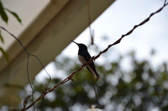 Mindo Real: Colibri
