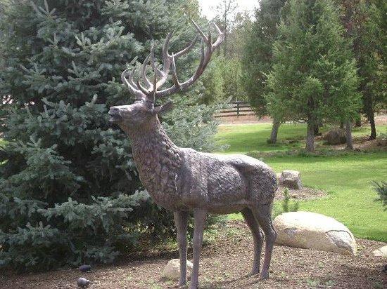Bear Creek Lodge: Elk