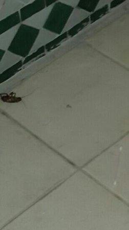 Ibis Marrakech Centre Gare: salle de bain très sale avec des cafards partout et des cheveux par terre. Grossomodo , on a pas