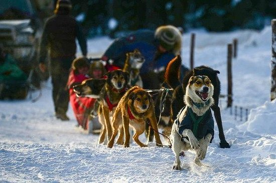 ‪Kingmik Dog Sled Tours‬