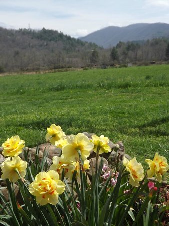 Dragon's Rest Cabins : Spring time!
