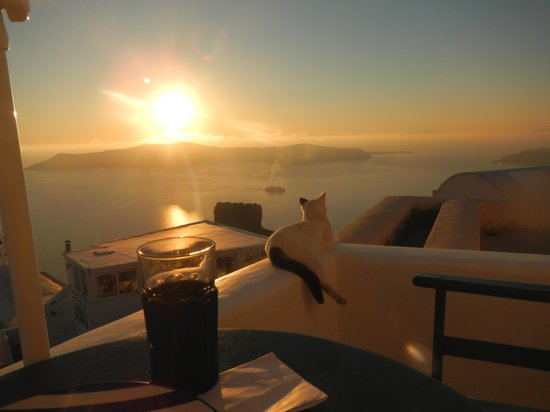 Arc Houses: resident cat enjoying the view