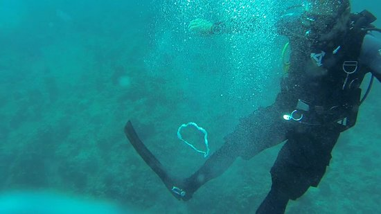 Kaimana Divers: Ring of Bubbles by Kevin