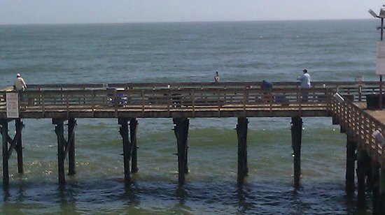 Galveston's 61st Street Fishing Pier: Brown Pelican waiting for a snack.