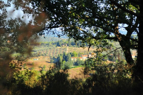 Ancora del Chianti Eco BB & Art Retreat in Tuscany : Incredible views