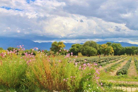 Los Poblanos Historic Inn & Organic Farm: The grounds