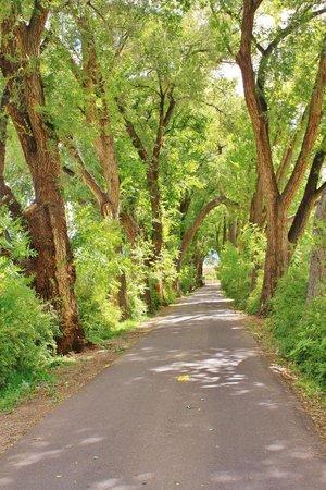 Los Poblanos Historic Inn & Organic Farm : Welcoming driveway