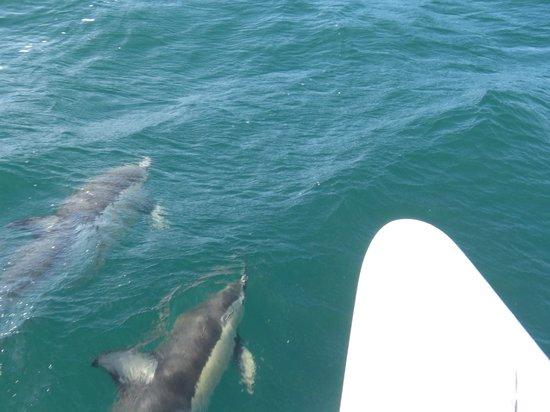 Island Sailing onboard Te Aura - Waiheke Island: Wildlife