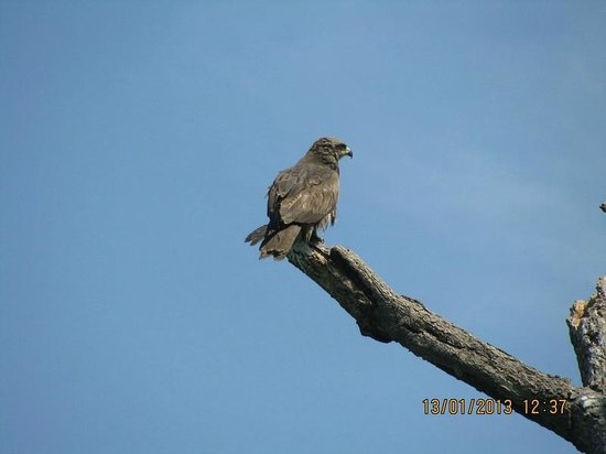 Karanji Lake: eagle on the island