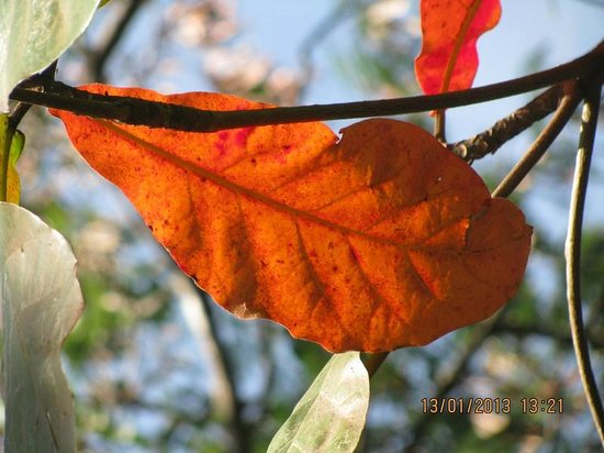 Karanji Lake: flora-fauna