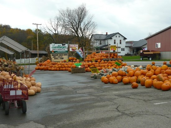Hershberger Farm & Bakery: Pumpkins