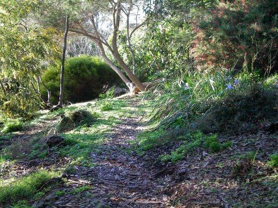 Marion Bay, Australia: garden walks