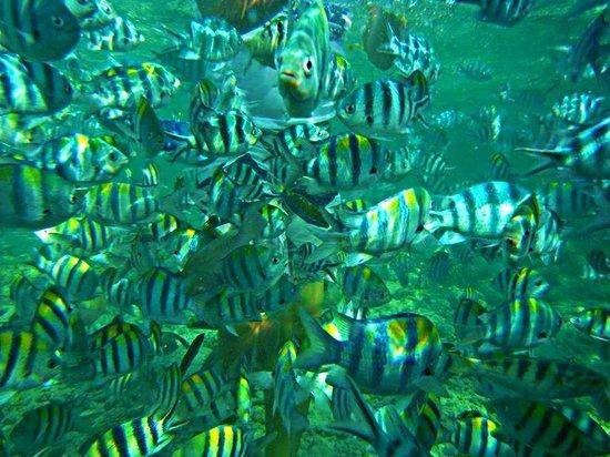 Nalusuan Island Marine Sanctuary: FISHES!