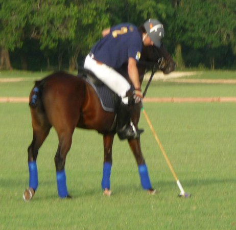 Casa de Campo Re: Polo with Nacho Figueras