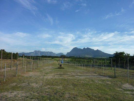 Drakenstein Lion Park: View of lion enclosures