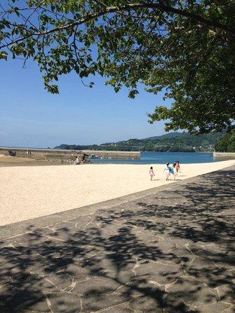 Cherry Blossom Trees along Yunoko Beach Road: 湯の児温泉海水浴場