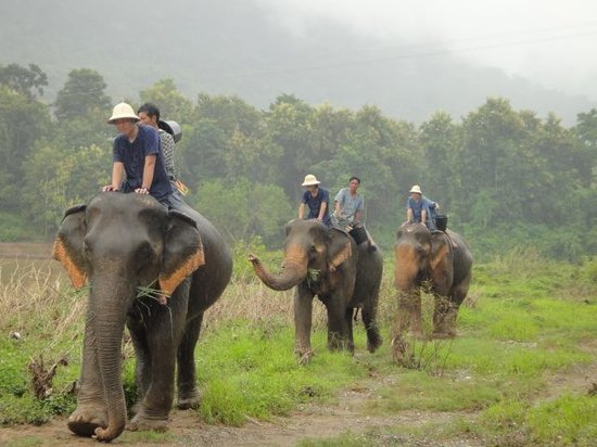 Mahout Lodge: Elephant going to Bath