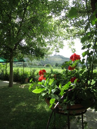 Agriturismo La Pievuccia: The view from outside our room