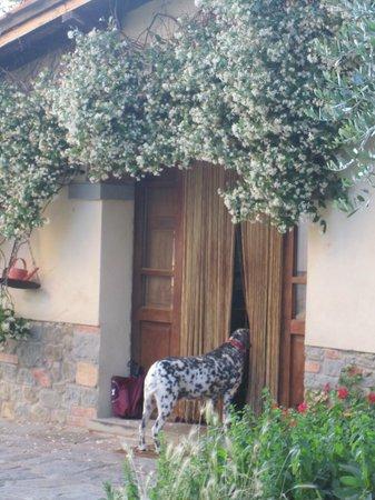 Agriturismo La Pievuccia: Looking into Lydia's kitchen