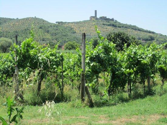 Agriturismo La Pievuccia: Across Riccardo's grape vines