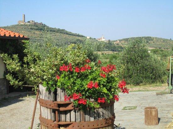 Agriturismo La Pievuccia : The flowers of La Pievuccia