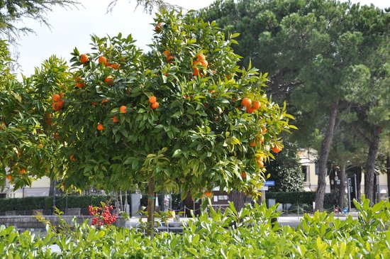 Hotel Sirmione: номер на первом этаже выходил на лужайку с ромашками и мандаринами :)