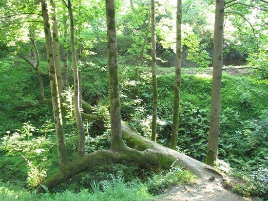 O Galogre : Ботанический сад, из 1го упавшего дерева получилось 12 )