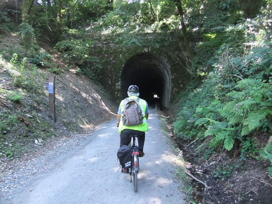 Dartmoor Electric Bicycles: woodland tunnel