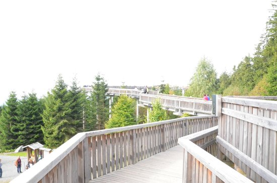 Der Waldwipfelweg ist auch mit dem Rollstuhl erlebbar.