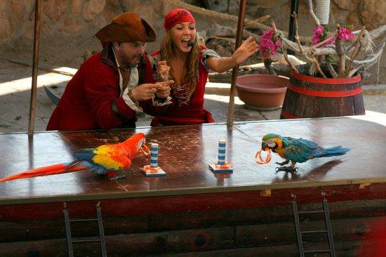 Κάλβια, Ισπανία: Шоу попугаев