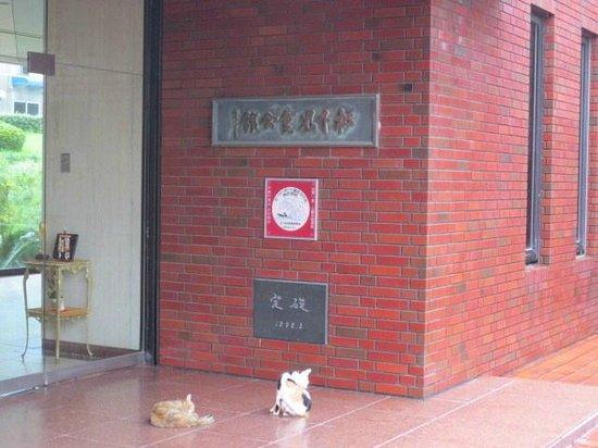 Matsushita Art Museum: 入口と猫