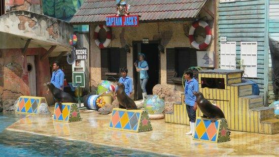 Safari World: Sea Lion Show