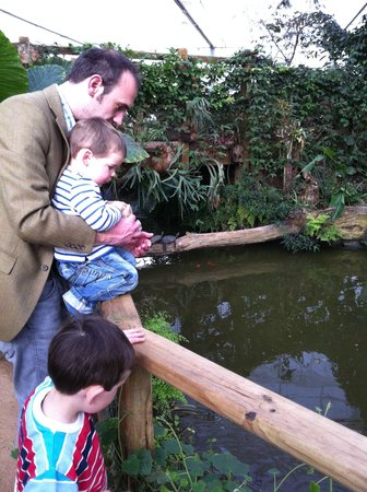 The North Somerset Butterfly House: feeding terrapins