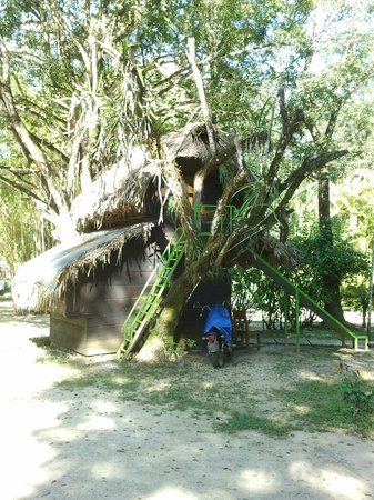 Mayabell: The Tree House