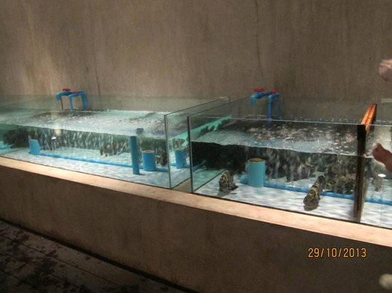 Lotus Restaurant : tank for live seafood