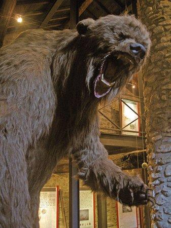 Grotte di Equi Terme, orso delle caverne